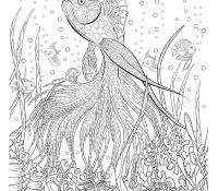 Rivers 29 Coloring Page