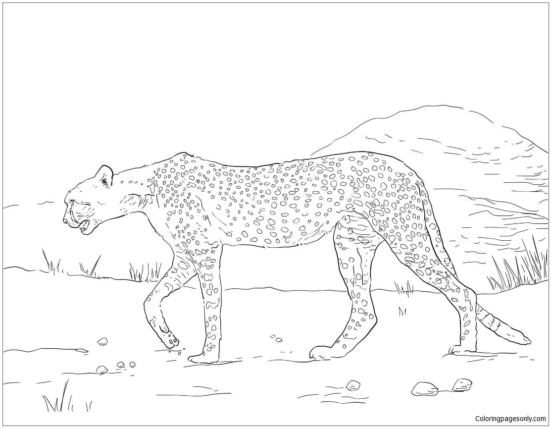 Cheetah Sleeping Coloring Page - Free Cheetah Coloring Pages ... | 864x1113