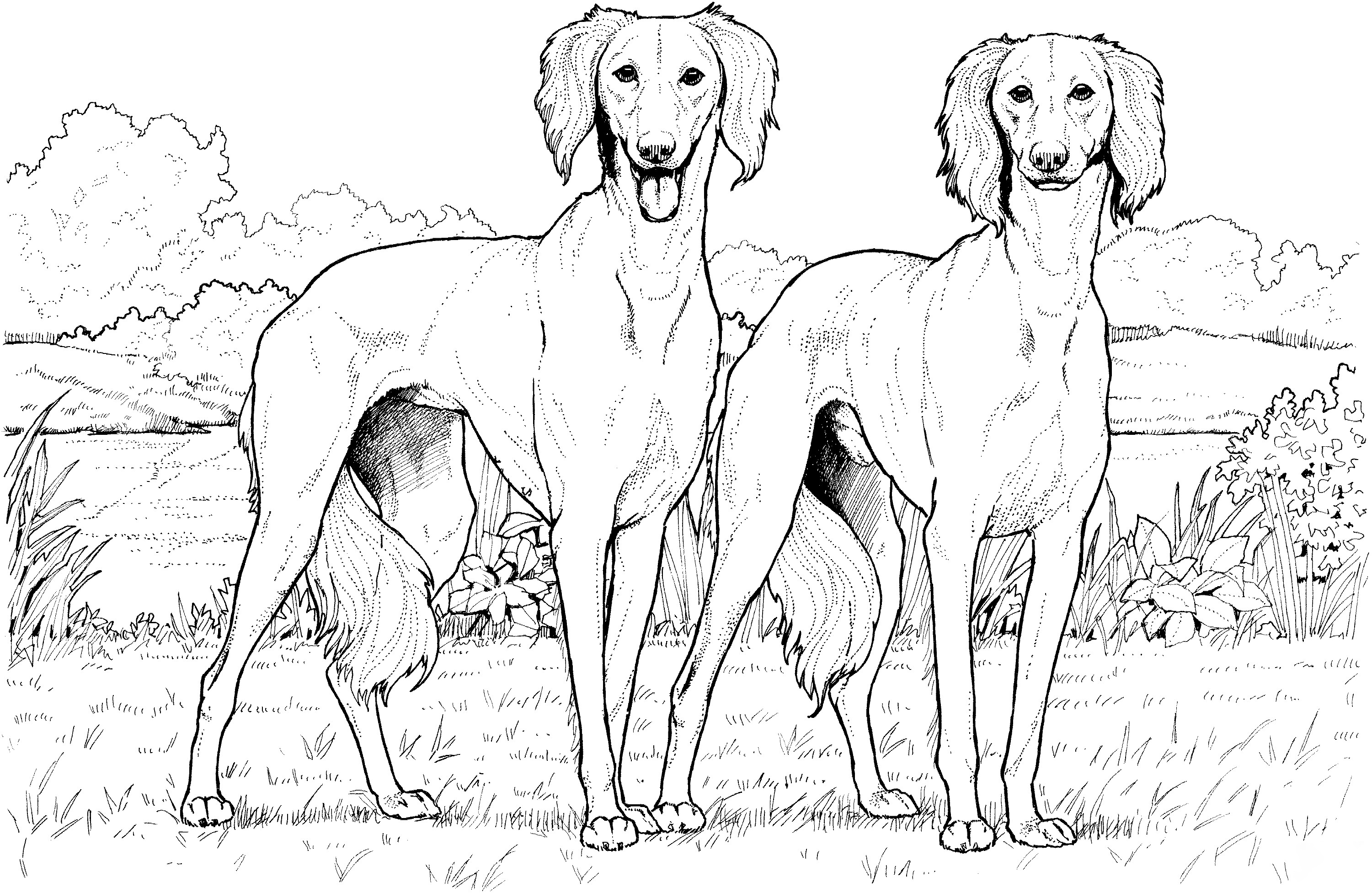 Saluki Twins Coloring Page