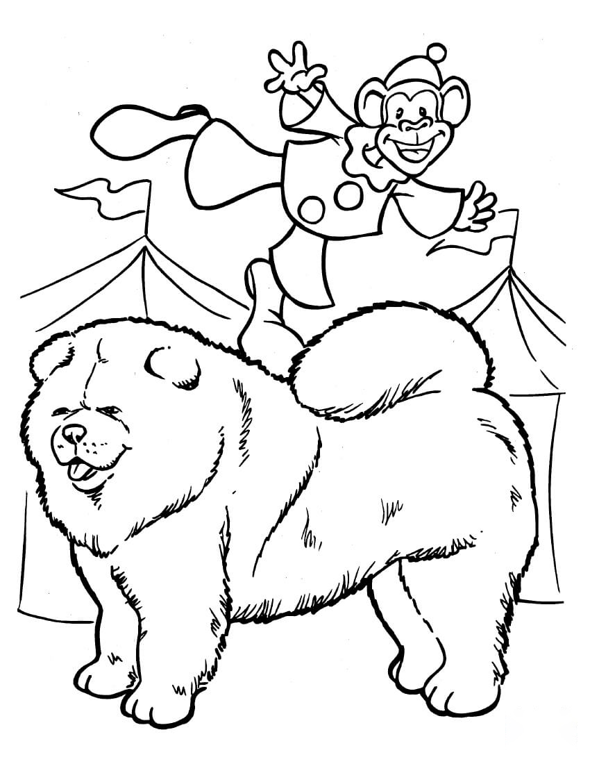 Samoyed with monkey clown Coloring Page