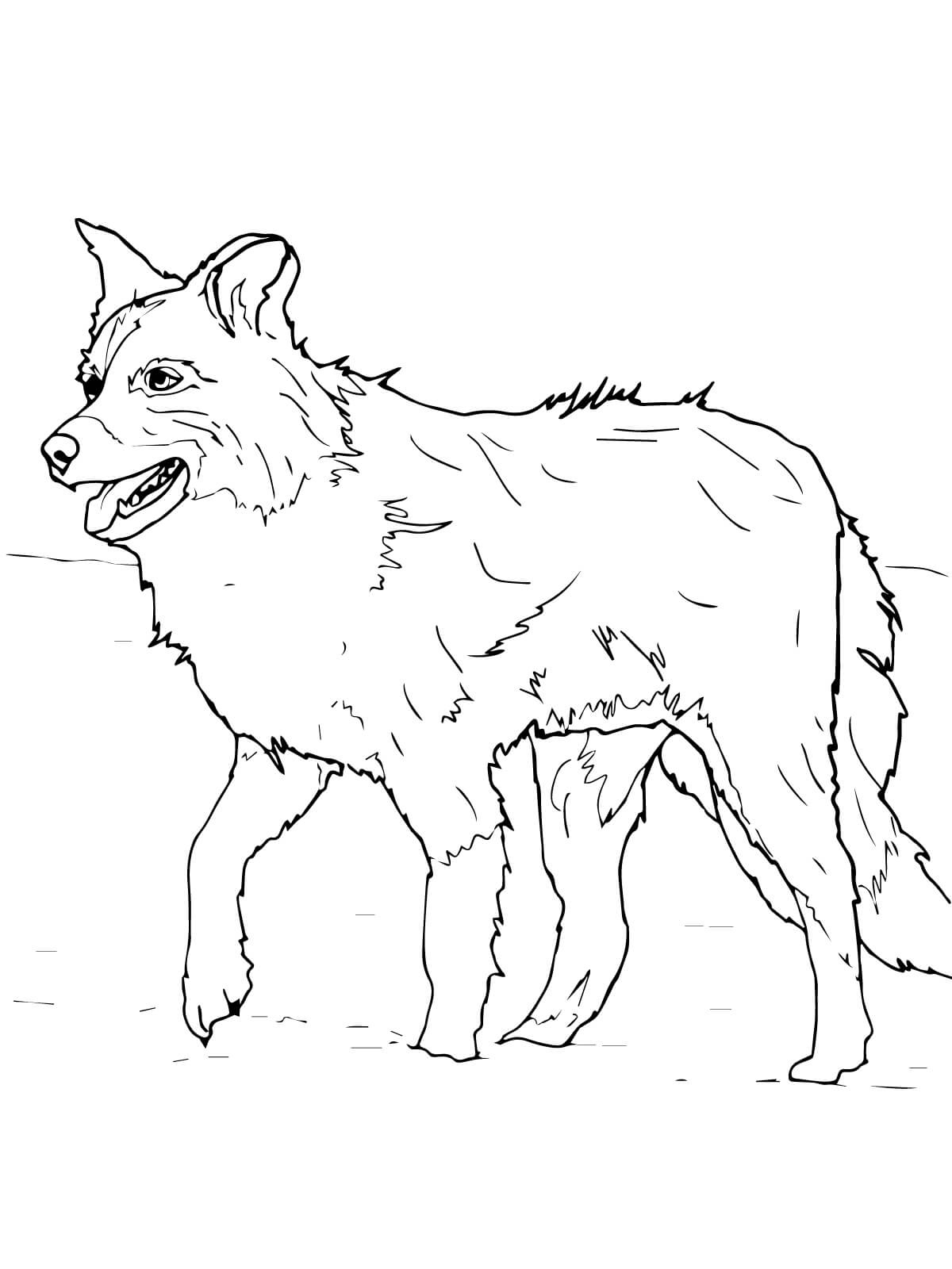 Scotch Sheep Dog Coloring Page