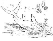 Scratching Ichthyosaur
