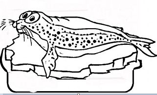 Seal Ice Countries North South Poles Coloring Page