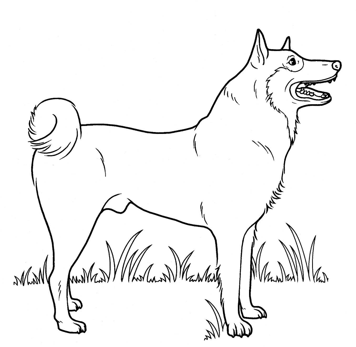 Street Dog Coloring Page