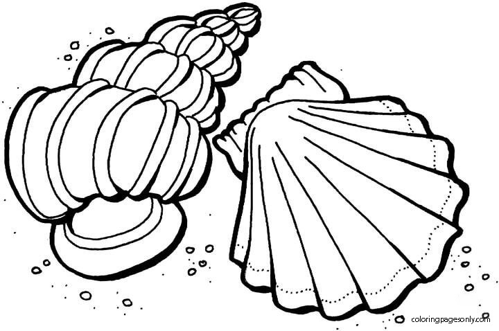Shells from the sea Coloring Page