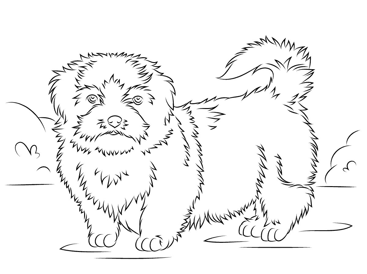 Shih-tzu Coloring Page