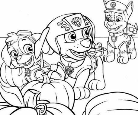 Skye, Zuma And Chase From Paw Patrol