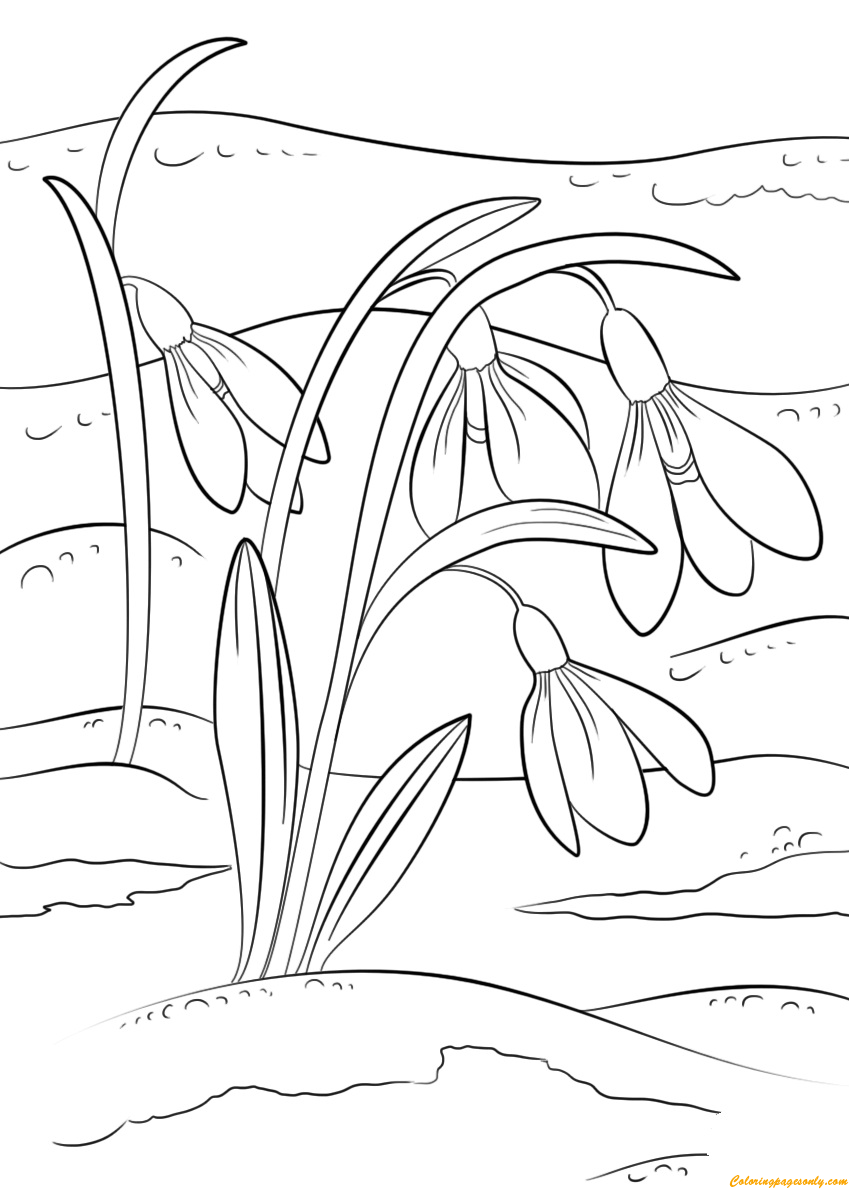 Snowdrop Flowers Coloring Page