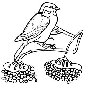 Sparrow Bird Winter Animal