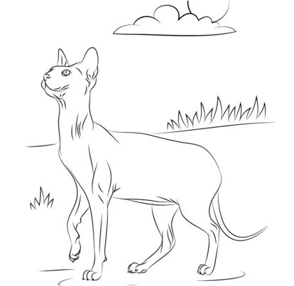 Sphynx Cat Coloring Page