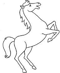 Spotlight Horse
