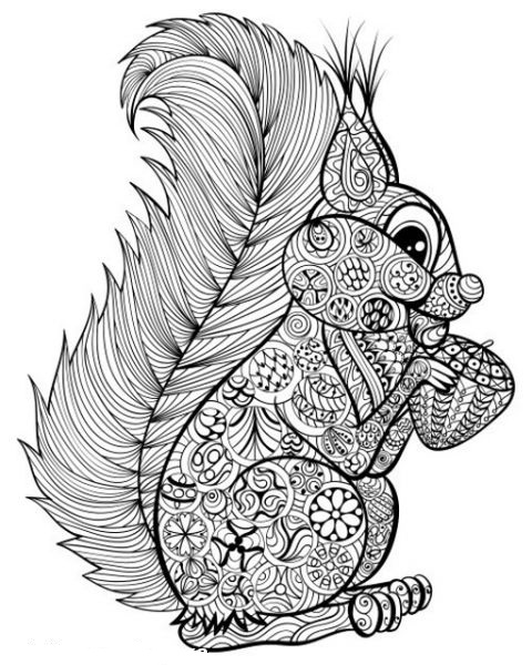 Squirrel Eating Nut Coloring Page