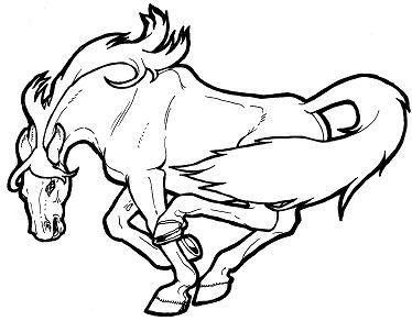 Startling Wild Horse