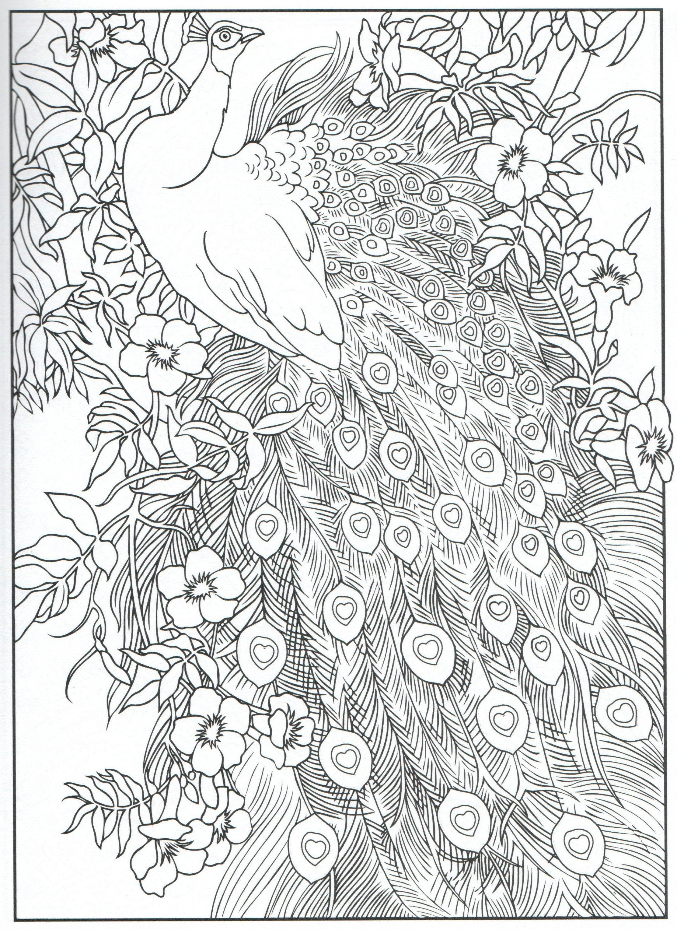 The Beauty Of Peacock Coloring Page