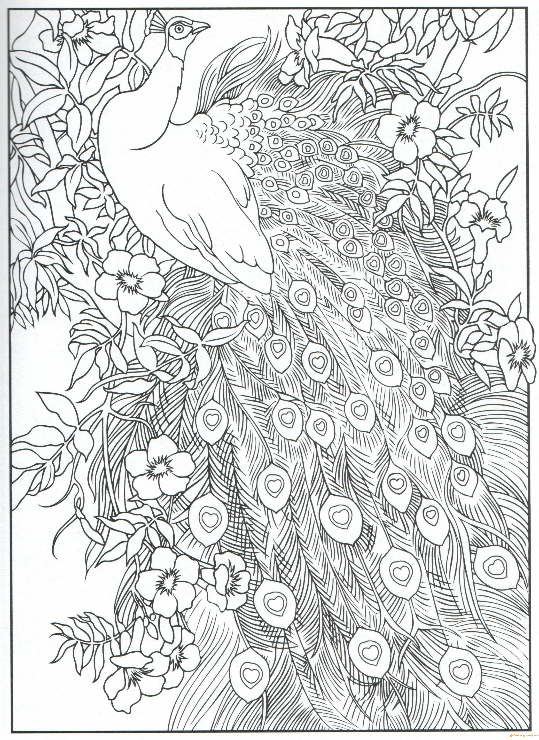 full screen download print picture - Peacock Coloring Pages