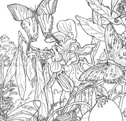 The Forest 1 Coloring Page