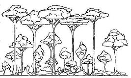 The Rainforest Label Layers Points Coloring Page