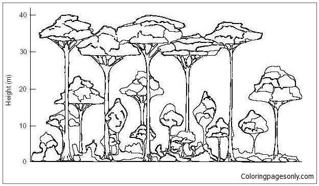 The Rainforest Label Layers Points Coloring Pages - Nature & Seasons Coloring  Pages - Free Printable Coloring Pages Online