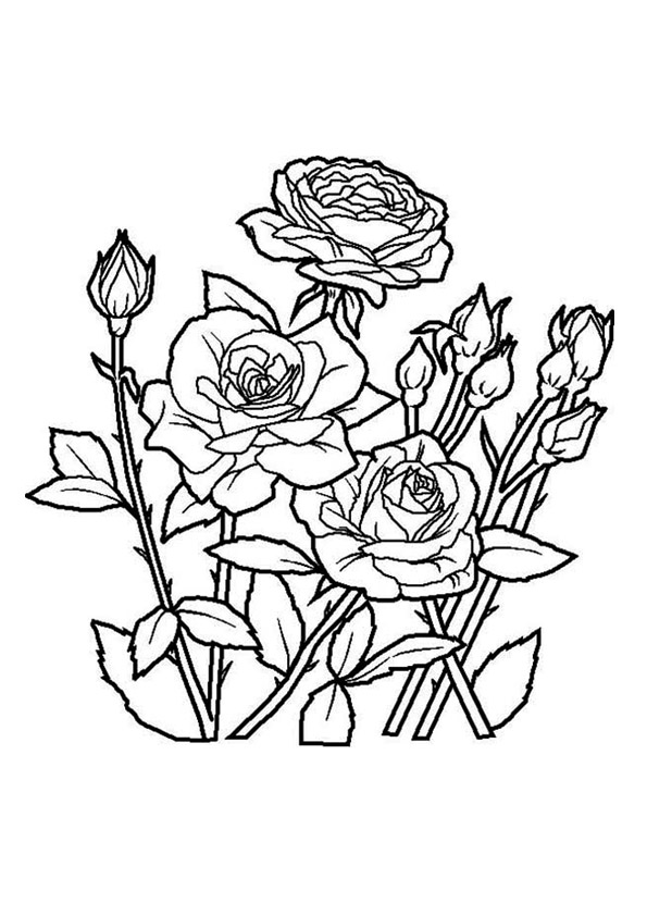 The Spring Rose