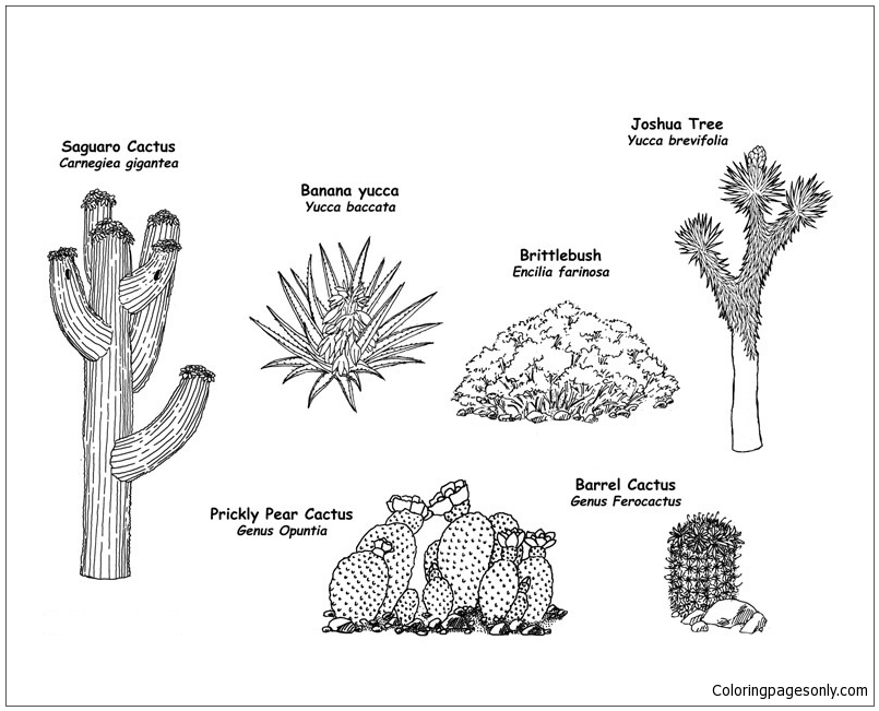The Wild Flowering Plants Of The Desert Coloring Page Free