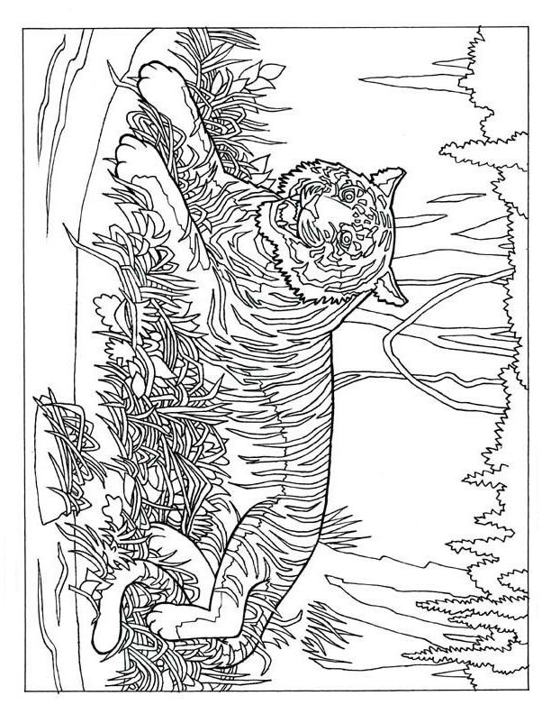 Tiger In The Forest Coloring Page