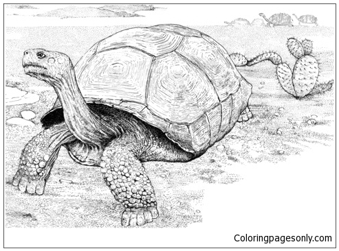 Tortoise In A Desert Coloring Page