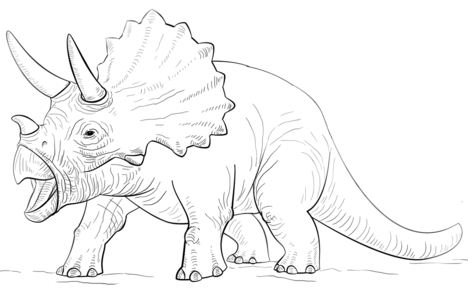 Triceratop Dinosaur Coloring Page
