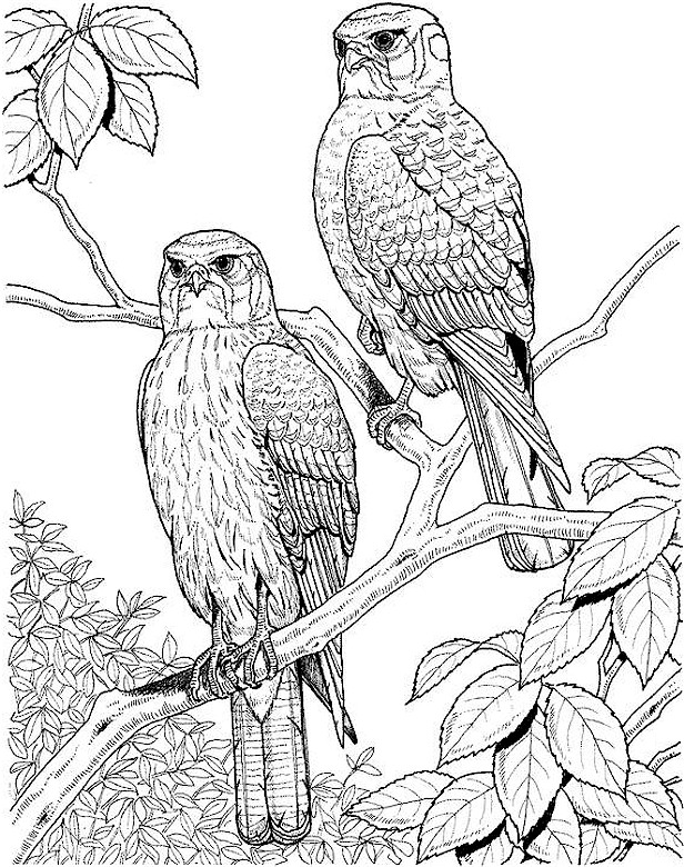 Two Eagles in Tree Coloring Page