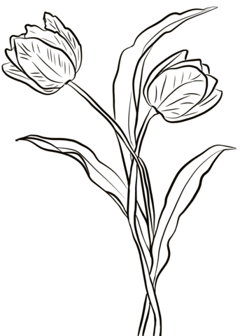 Two Tulips