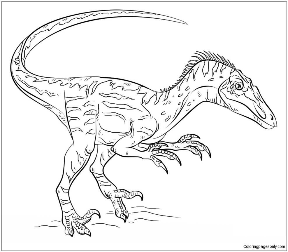 Velociraptor Dinosaur 1 Coloring Page