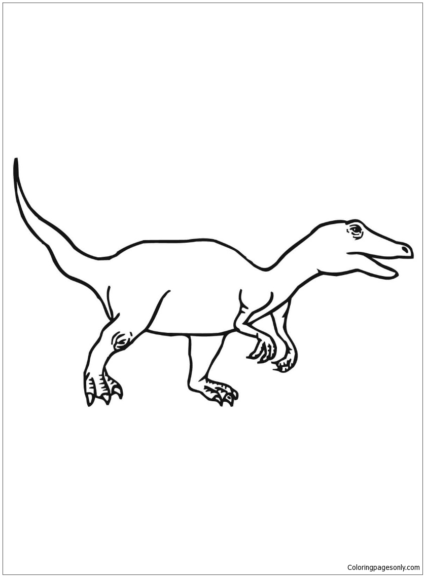 Velociraptor Dromaeosaurid Theropod  From Dinosaur Coloring Page