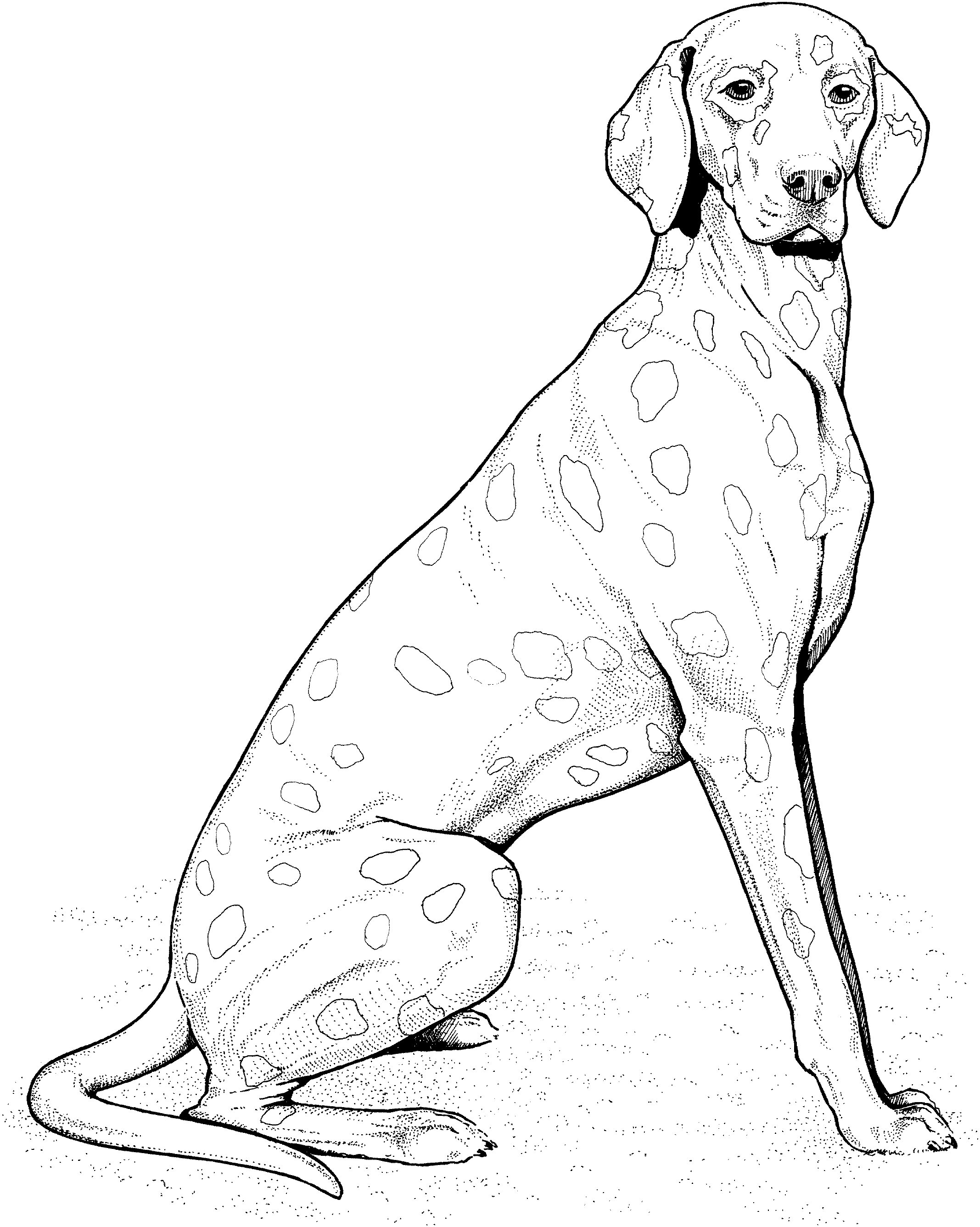 Weimaraner Coloring Page