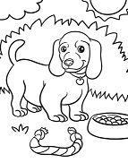 Weiner Dog Puppy