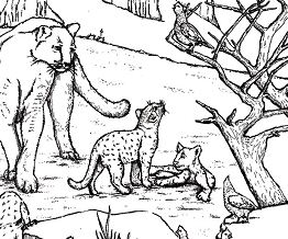 West Texas Mountain Lion Coloring Page