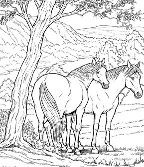 Wild Horse Coloring Page