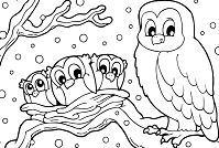 Winter Snowy Owl Coloring Page