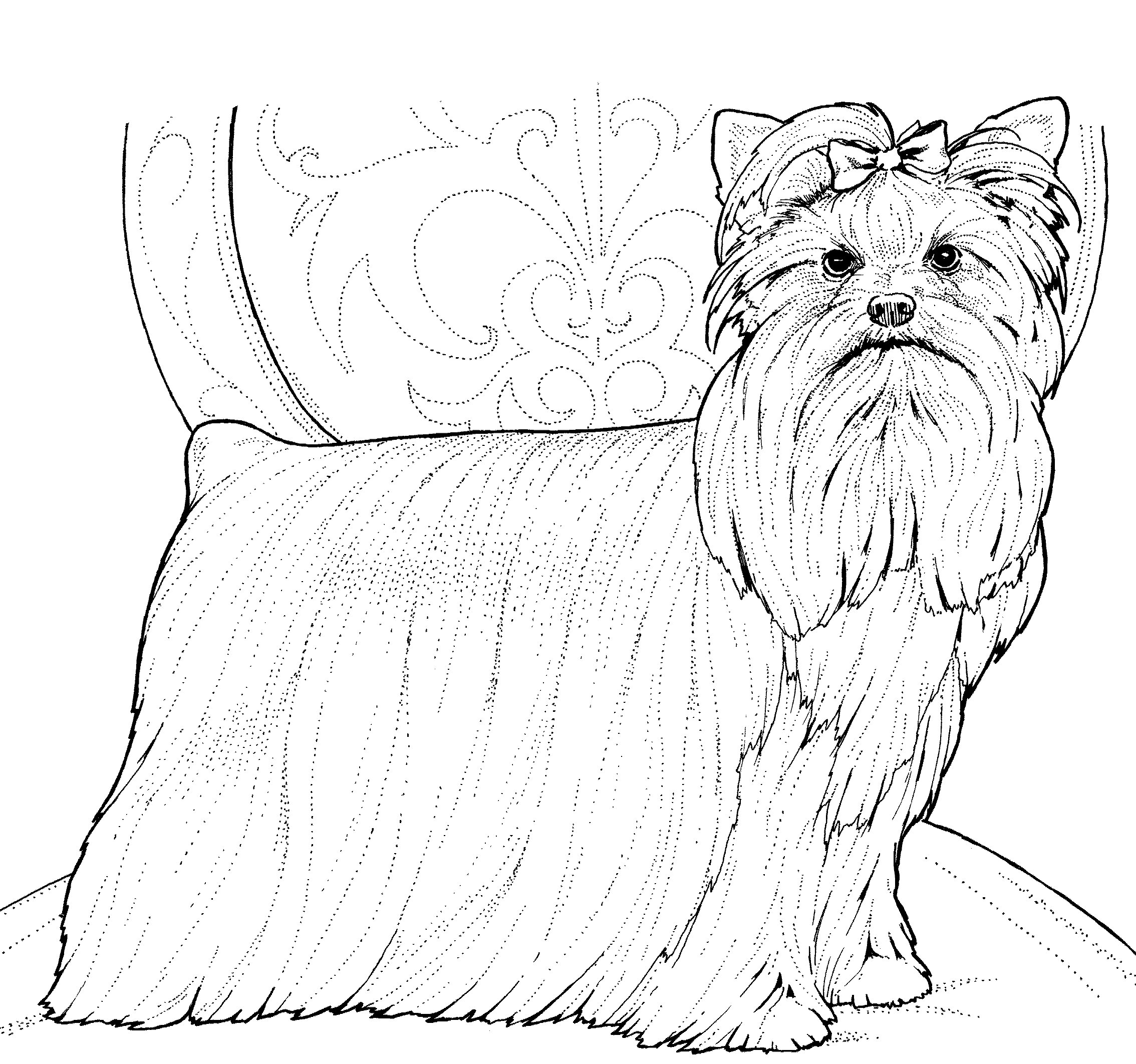 Yorkshire Terrier on chair Coloring Page