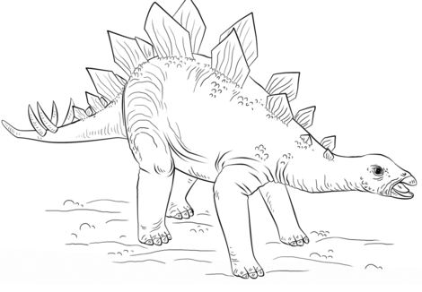 Young Stegosaurus From Dinosaur Coloring Page