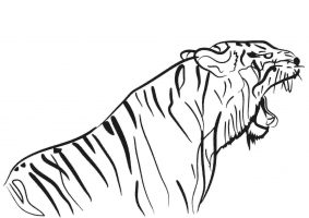Bengal Tiger is regarded as the strongest and most powerful Coloring Page