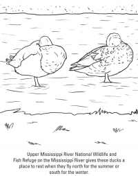 Pair of duck in the Mississippi River Coloring Page