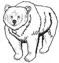 Mammals Coloring Page