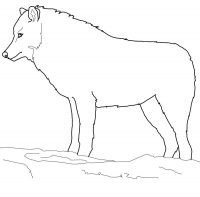 Drawing simple wolf in Arctic forest Coloring Page