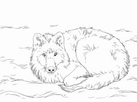 Artic Wolf lays on the snow Coloring Page
