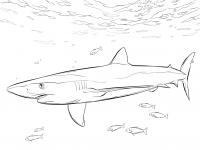 Blue Shark with pilot fishes under the sea Coloring Page