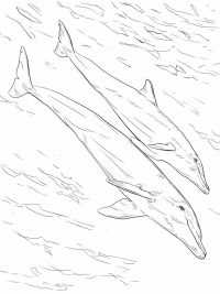 Bottlenose dolphin mother and juvenile Coloring Page