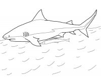 Bull Shark has short blunt snout in the water surface Coloring Page
