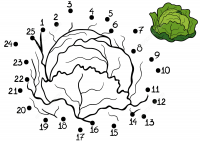 Cabbage from dot-to-dot Coloring Page