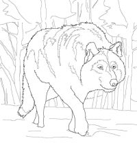 The gray wolf crouched down behind the bushes Coloring Page