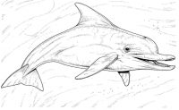 The Acient Dolphin shows its teeth Coloring Page