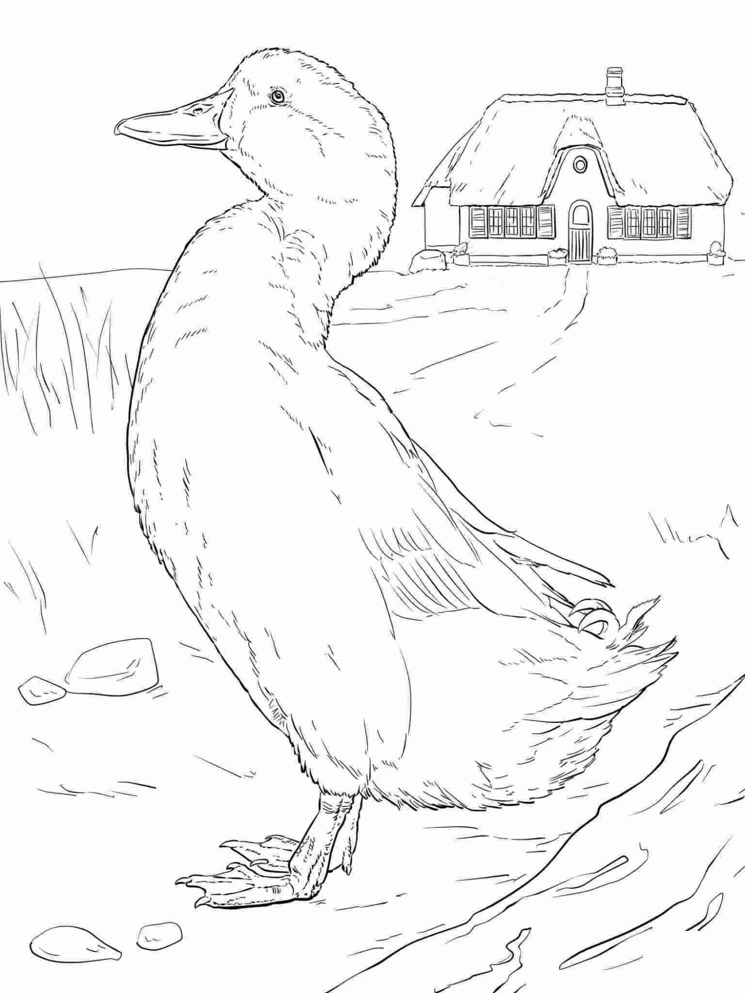 Domestic duck walks around in the farm Coloring Pages